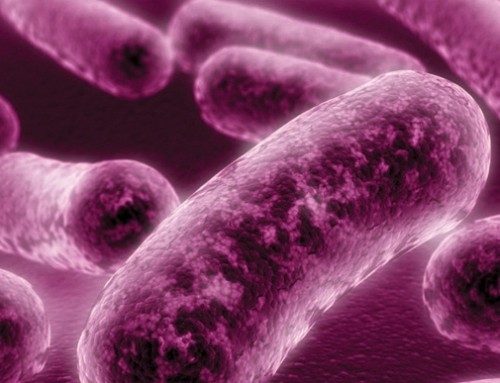 Highest levels of Legionnaires' Disease cases in Ireland recorded in 2017