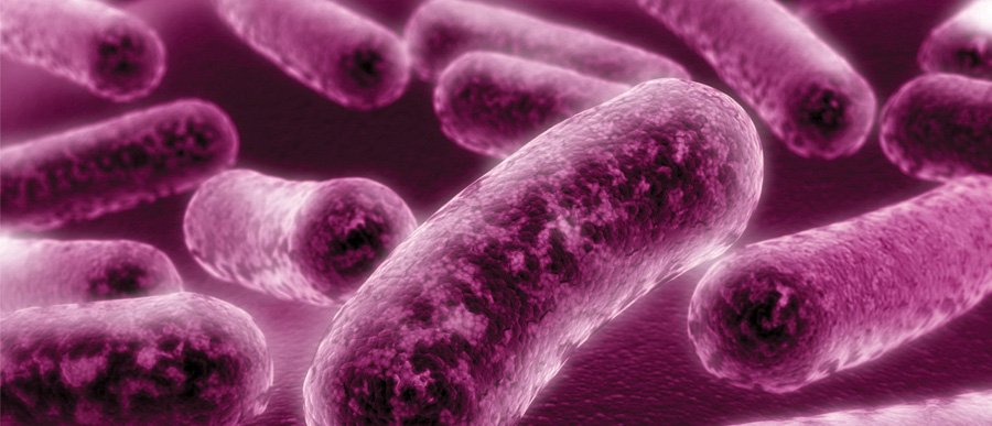 Legionella bacteria hbe